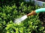 2830963-water-hose-spraying-water-in-a-garden